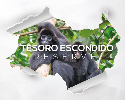 Voluntarios TesoroEscondido