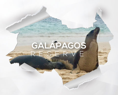 Voluntariado en Galapagos