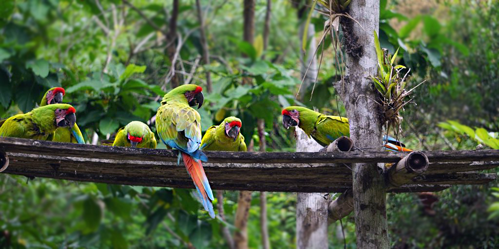 WORKSHOPS ON THE CONSERVATION OF GREAT GREEN MACAW