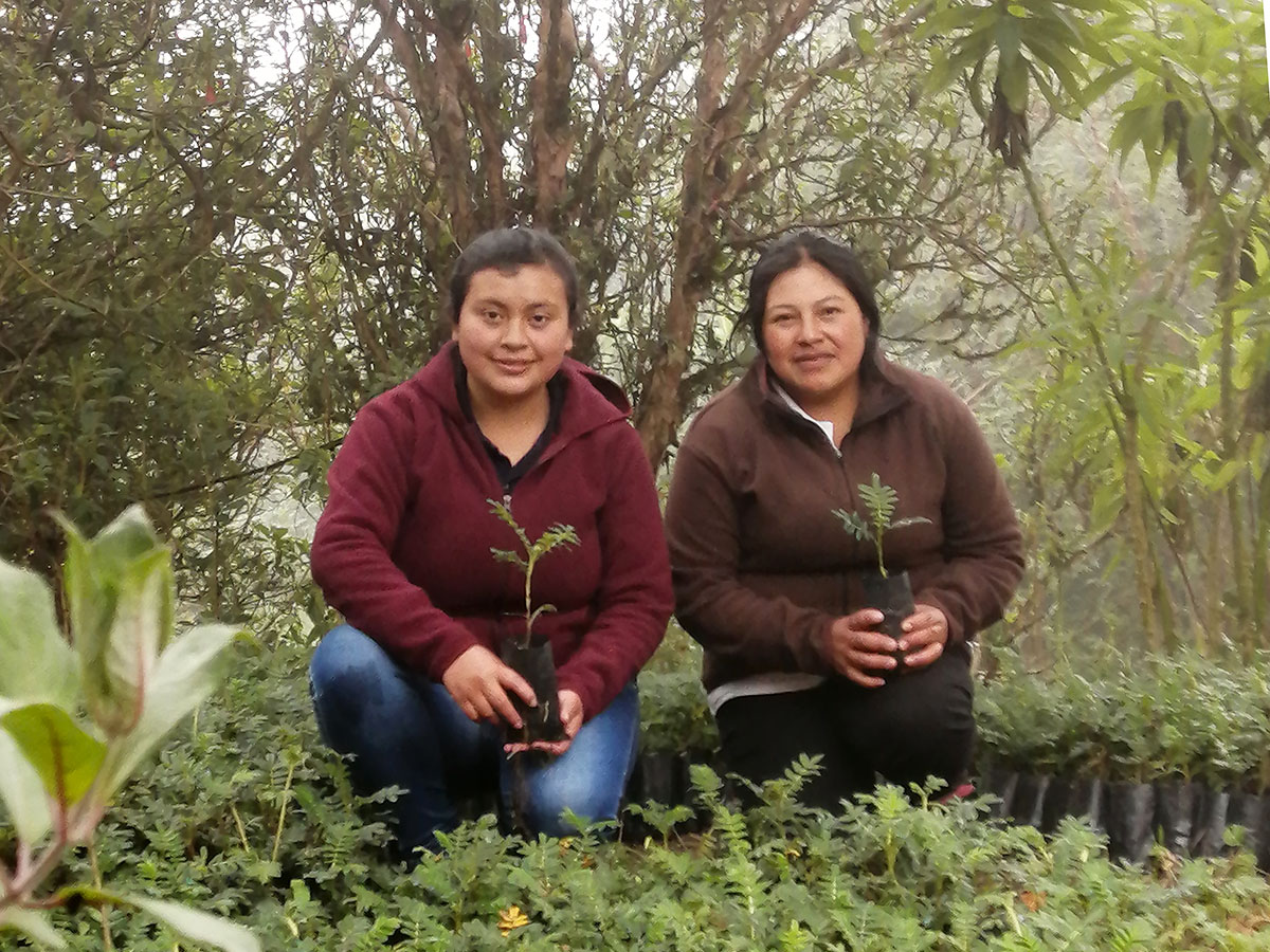 Polylepis trees reforestation at our Yanacocha reserve!